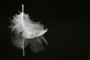 floating-feather-356388